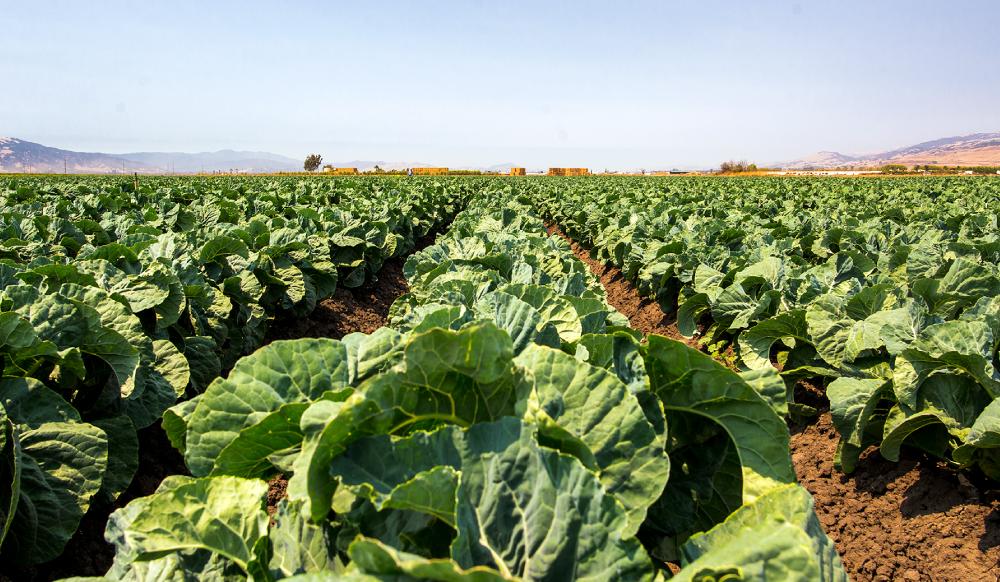 Produce Industry Braces for Mexico Border Shutdown