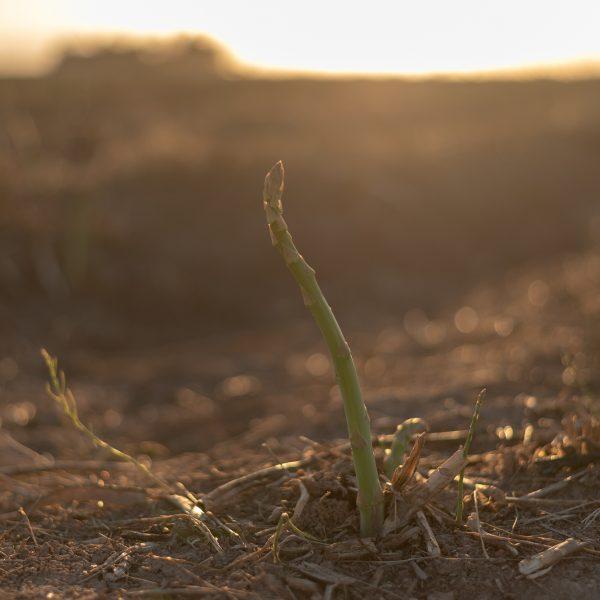 Baja Son Growers